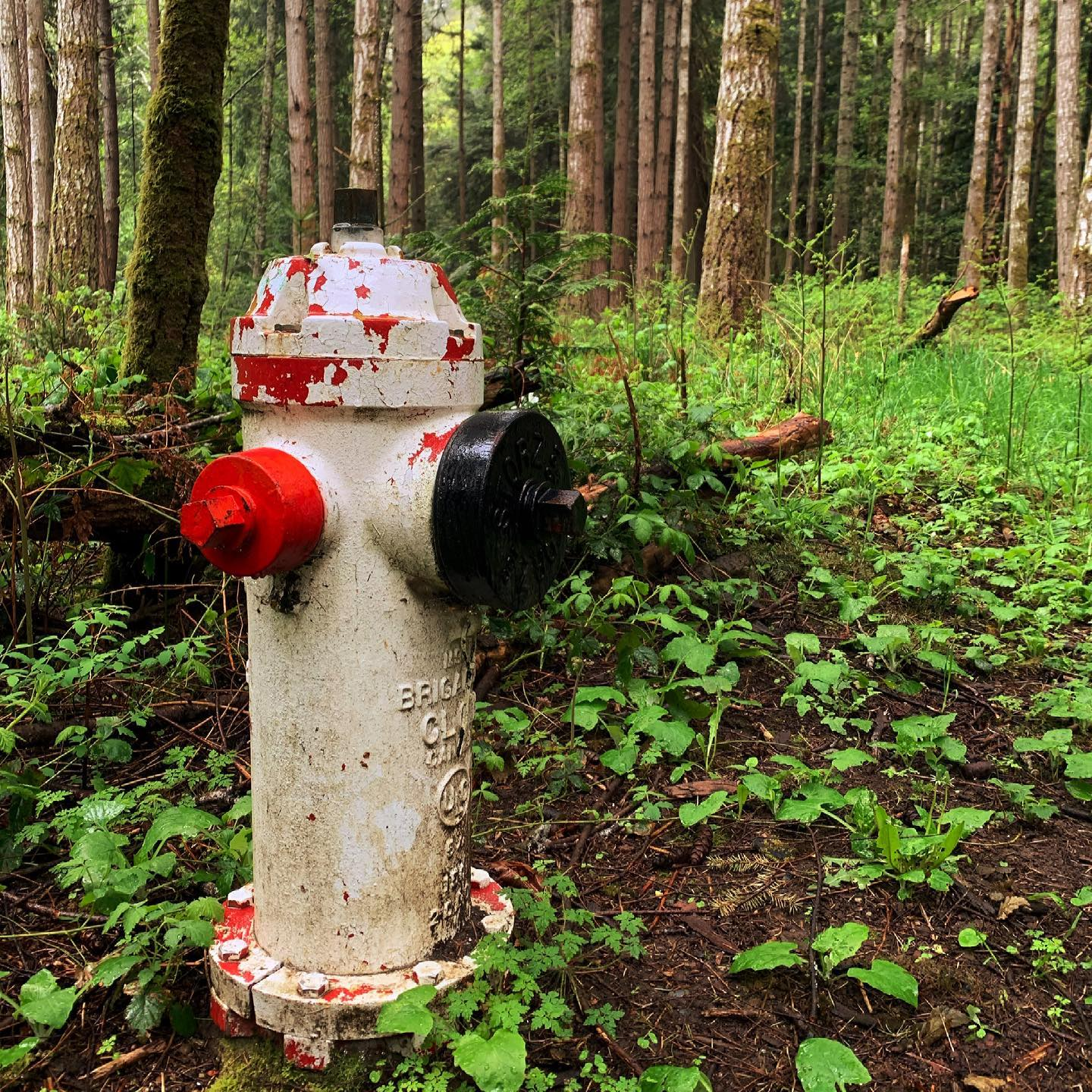 If you go out in the woods …#dogwalk #firehydrant #aged #photography #yyj #royalroads #royalroadsuniversity