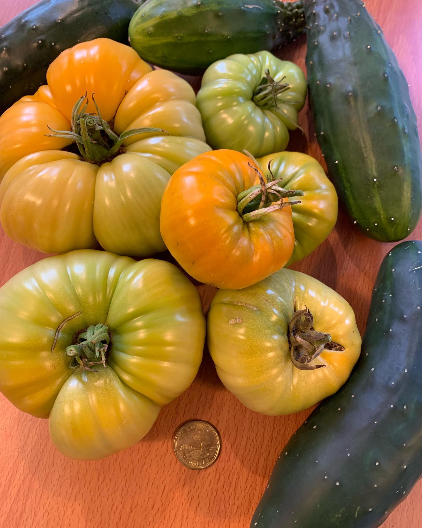 Tomatoes and cucumbers harvested today. Loonie for scale. #harvest #garden #wegrewthis #loonieforscale
