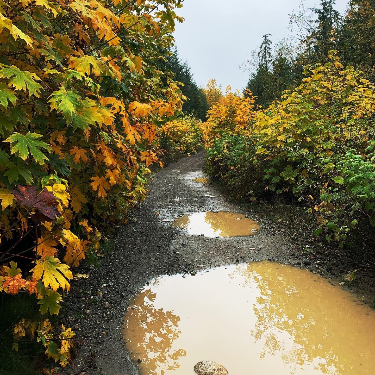 Wet coast fall. This is after the atmospheric river rolled through. #alltimefalltime #wetcoast #puddlesandleaves